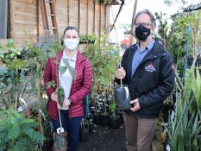 Instituto vai usar mudas doadas em projeto de Arborização da cidade